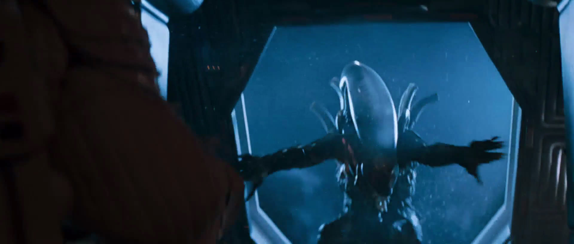 illegal aliens essay